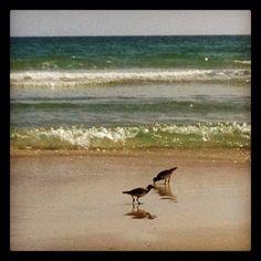 Enjoying the sand and surf!  New Smyrna Beach, FL