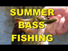 Summer bass fishing tips and techniques that are proven to catch more fish! Here's how to find and catch big summer bass. Come check out the best Bass Fishin. Bass Fishing Tips, Crappie Fishing, Best Fishing, Fishing Basics, Fishing Stuff, Australian Bass, Bait Caster, Spinner Bait, Fishing Techniques
