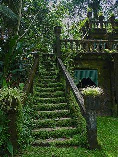 Mossy stairways in Paronella Park, Queensland, Australia