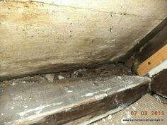 Door langdurige lekkages kan een dakconstructie flink aangetast worden. De muurplaat heeft flink wat houtrot Wood, Crafts, Manualidades, Woodwind Instrument, Timber Wood, Trees, Handmade Crafts, Craft, Arts And Crafts