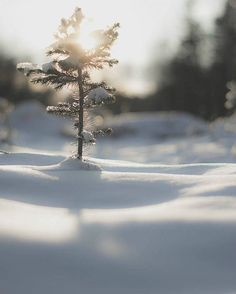aww little tree out in the snow