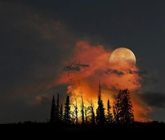 ☮ & ♥☮ & ♥☮ & ♥☮ & ♥☮ & ♥   When you know who you are;   When your mission is clear & you   Burn with the inner fire of unbreakable will;   No cold can touch your heart;   No deluge can dampen your purpose.   You know that you are alive.   ~ Chief Seattle ♥     ڿڰۣ♥ڿڰۣ♥ PEACE & LOVE ♥ڿڰۣ♥ڿڰۣ♥Deborah♥