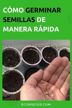 Cómo germinar semillas: pasos, consejos e informaciones #Econsejos #Consejos #Trucos #Bienestar #Casa #Jardines #Plantacion #Sembrado #ComoCultivar #ComoPlantar #Plantar #JardinCasero #Semillas #GerminarSemillas