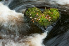 heart shapes in nature | have been a long term hunter of heart shapes in nature but come ...