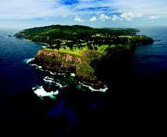 Norfolk Island....home of my favorite tree
