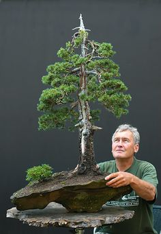 Bonsai Gallery of Walter Pall, Germany