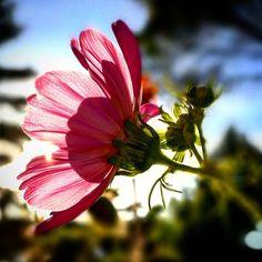 #mandavit #gradignan #flowers #bordeauxmaville #newtoy #huaweip9faitdesmiracles #huaweip9 #lilalilaloum