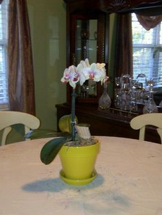 Orchid Palaenopsis makes a pretty table center piece.