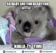 Adorable baby KOALA being cared for at the Australian Wildlife Hospital. Australian Wildlife, Australian Animals, Cute Little Animals, Cute Funny Animals, Funny Koala, In Natura, Tier Fotos, Cute Animal Pictures, Cute Creatures