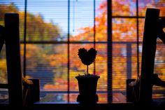 <ウンジからの蓼科の紅葉>二人で眺める景色は思い出に残るはず