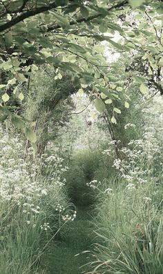 "A Cottage Garden: Heather Edwards The Old Malthouse, Wiltshire, England The secret garden ""A mown path leads through a sea of cow parsley (Anthriscus sylvestris) to a willow (Salix) arch on a still, early, summer morning."