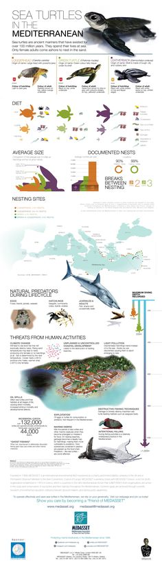 Learn all about sea turtles in the Mediterranean in our new infographic, also available in print. Designed by Memuco