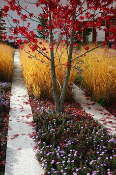 Gardening Autumn - Buckauer Herbst by Prinz Wilbert, landscaping, landscape design, gardening - With the arrival of rains and falling temperatures autumn is a perfect opportunity to make new plantations Modern Landscaping, Landscaping Plants, Landscaping Ideas, Landscape Architecture Design, Landscape Designs, Contemporary Garden, Ornamental Grasses, Plant Design, Winter Garden