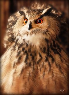 Great Horned Owl by Roge Solana From Tawny Owl, Owl Pictures, Great Horned Owl, Wise Owl, Snowy Owl, Cute Creatures, Wild Birds, Beautiful Birds, Pet Care