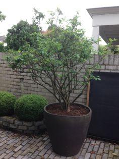 http://www.vandervleuten-beplanting.nl