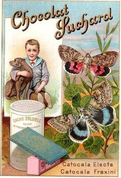 SUCHARD -- Cacao