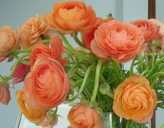 apricot-colored ranunculus