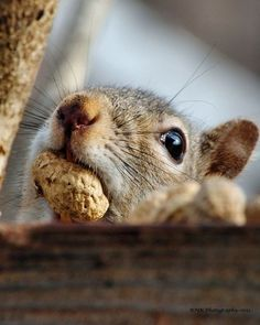 Fall is just full of nuts and of course that means we can expect to see more squirrels, my favorite backyard rodent! :)