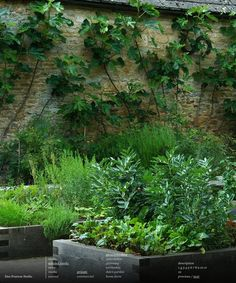figs espalier on stone wall garden by Dan Pearson Potager Garden, Edible Garden, Garden Beds, Vegetable Garden, Garden Landscaping, Back Gardens, Outdoor Gardens, Dan Pearson, Espalier