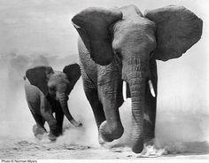 run elephants