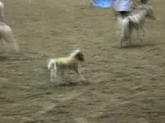 The Cutest Thing Happened During A Horse Show. I Can't Stop Laughing! | PetFlow Blog - The most interesting news for pet parents around the world.