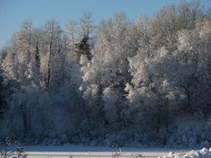 Winter Land Photographed By Teresa Albert