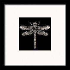 Fine Art Framed Prints Barry Goodman London Moth Fly Wasp Dragonfly Anchor