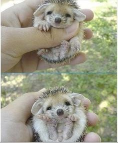 Dump A Day Quite Possibly The Cutest Animals On The Internet! - 32 Pics