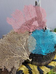 Natural Dried Sea Fan Coral Hand painted in by seashellsbyseashore