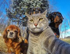 The feline selfie queen! Manny the cat regularly posts images that appear to show this moggy holding a smartphone