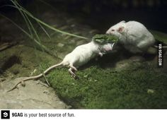 Mouse tries to save a friend from being eaten by a snake...true friendship