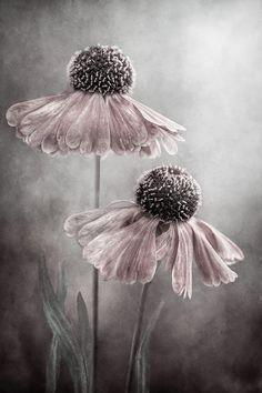 La Vie Rose: Foto