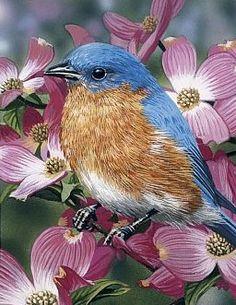 Bluebirds in dogwood flowering tree Dogwood Trees, Flowering Trees, Bird Pictures, Pictures To Paint, Pretty Birds, Beautiful Birds, Tier Fotos, Color Pencil Art, Bird Drawings