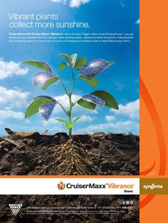 Vibrant plants collect more sunshine. New Cruiser Maxx Vibrance Beans ad for 2013. www.syngentafarm.ca