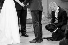#dog #wedding #photograph