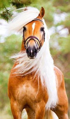 "theenchantedcove: "" Pin by Elsa Morris on *Horses* | Pinterest """
