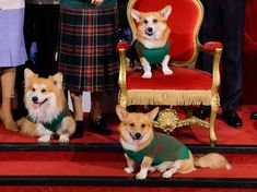 Even the Queen's corgis were dressed in a Christmas jumper! Photo courtesy of Madame Tussauds and Save The Children #Corgis  #Christmas #Royals