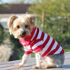 Our Preppy Scarlett Red and White Striped Polo Shirt for Dogs are not only perfectly preppy, but puppy will be super comfy in this 100% cotton collared polo featuring an embroidered adorable dog face on the collar. www.beaujax.com