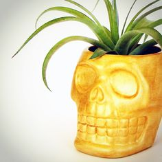 Hand painted sugar skull planters available. Custom colors on request.