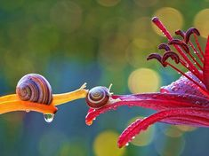 The Most Amazing Up-Close Snail Photos You'll Ever See Ukrainian photographer Vyacheslav Mishchenko catches these unbelievably stunning up-close photographs of snails, and I've never wanted to be friends with a snail more than this moment.