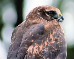 """"""" not the only place w/ raptors. hosts a live Birds of Prey show tomorrow! Ontario Parks, Birds Of Prey, Raptors, Canada, Live, Places, Animals, Animales, Animaux"""