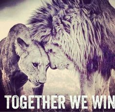 Together we win love quotes couple relationship lion Get the best tips and how to have strong marriage/relationship here: Lion Quotes, Yoda Quotes, Quotes Quotes, Lion And Lioness, Lion Love, My Sun And Stars, Couple Relationship, Relationships, Strong Relationship Quotes