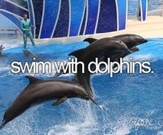 """Bucket List- Swim with dolphins. Check:) I've had the opportunity to """"sit"""" on a step and feed and interact with the dolphins, but never free to swim with them-would be a dream come true! The Places Youll Go, Places To See, Bucket List Before I Die, Life List, Summer Bucket Lists, Sea World, So Little Time, Dolphins, Just In Case"""