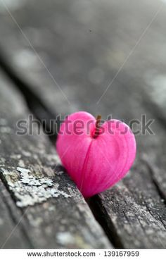 heart-shaped flowers on wooden surface