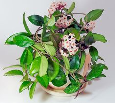 90cm artificiale succulente cactus pianta d/'arte hoja linearis SUCCULENTE pensile
