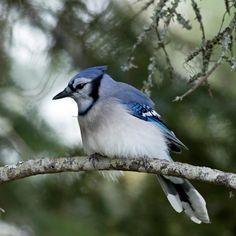 Algonquin Provincial Park - Algonquin Park - Bewertungen und Fotos – TripAdvisor Sounds Of Birds, Algonquin Park, Brighten Your Day, Bird Feathers, Turtles, Trip Advisor, Paint, Animales, Pictures