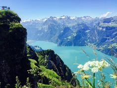 Fronalpstock, o melhor da Suíça, dicas de passeios, paisagem, lago, flor, natureza, montanha, neve