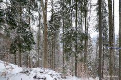 Bukovel Karpatlar