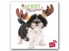 Hunderassen WeihnachtskartenMyrna Weihnachtskarte: Shih Tzu