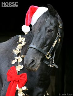 Capture a festive portrait of your horse for this year's holiday cards.
